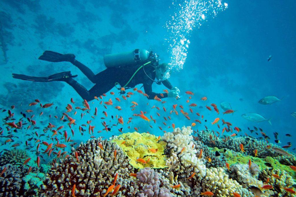 I Love Nha Trang - Half Day Nha Trang Diving Tour
